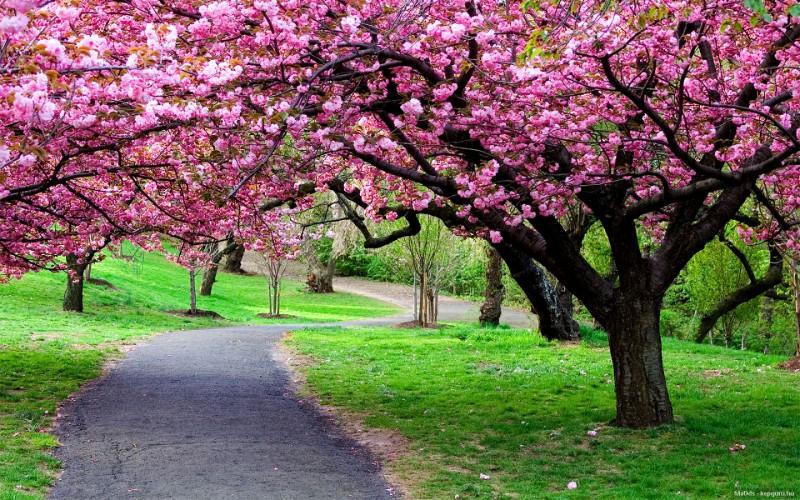 2016. tavasz: programjai, tervezett eseményei