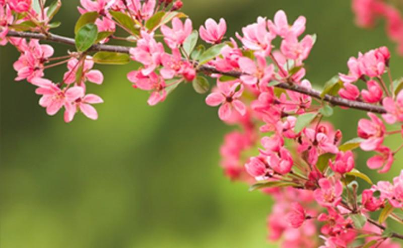 Tavaszi szünet a Huszár Gál Iskolában
