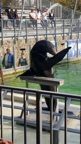Kirándulás a Nyíregyházi Állatkertben